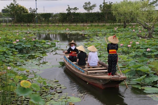 水生植物園 はす祭り